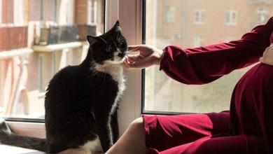 Photo of تأثير القطط على المرأة الحامل