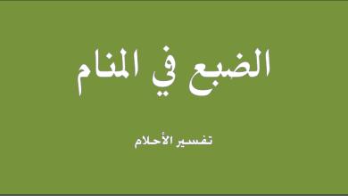 Photo of تفسير حلم الضبع في المنام