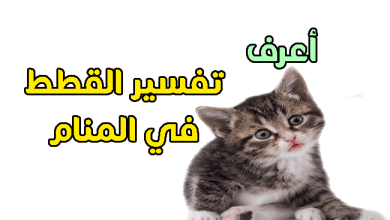Photo of تفسير حلم القطط في المنام