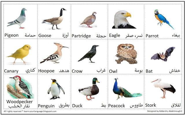 صورة أسماء الطيور بالإنجليزي Name of birds in English