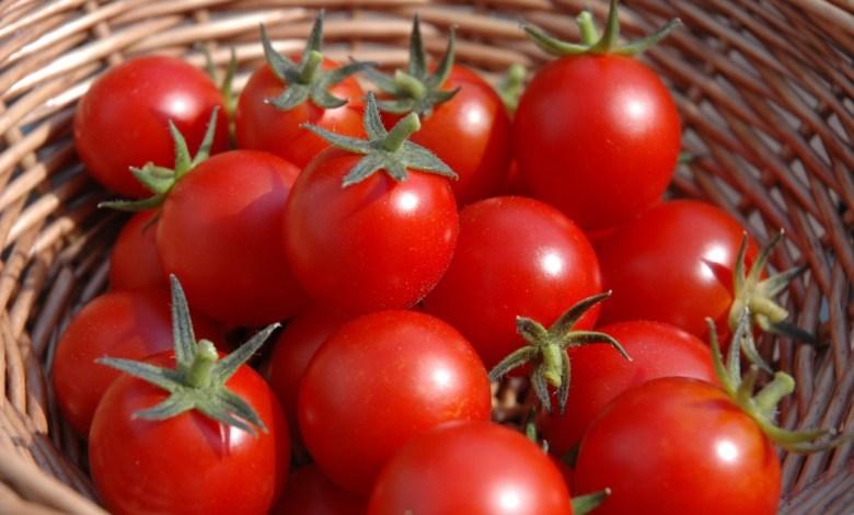 Photo of فوائد الطماطم