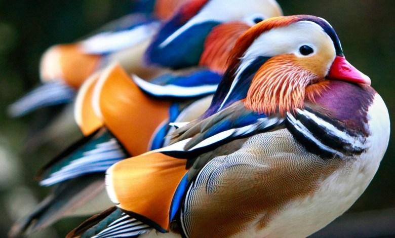 تفسير حلم الطيور للعزباء