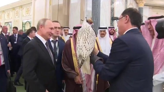 صور الصقر الهدية من بوتين للملك سلمان