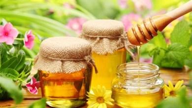 Photo of فوائد الصنوبر مع العسل