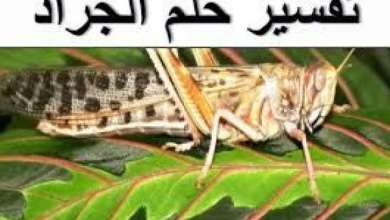 Photo of تفسير حلم الجراد في المنام