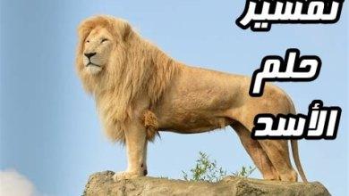 Photo of تفسير حلم الاسد