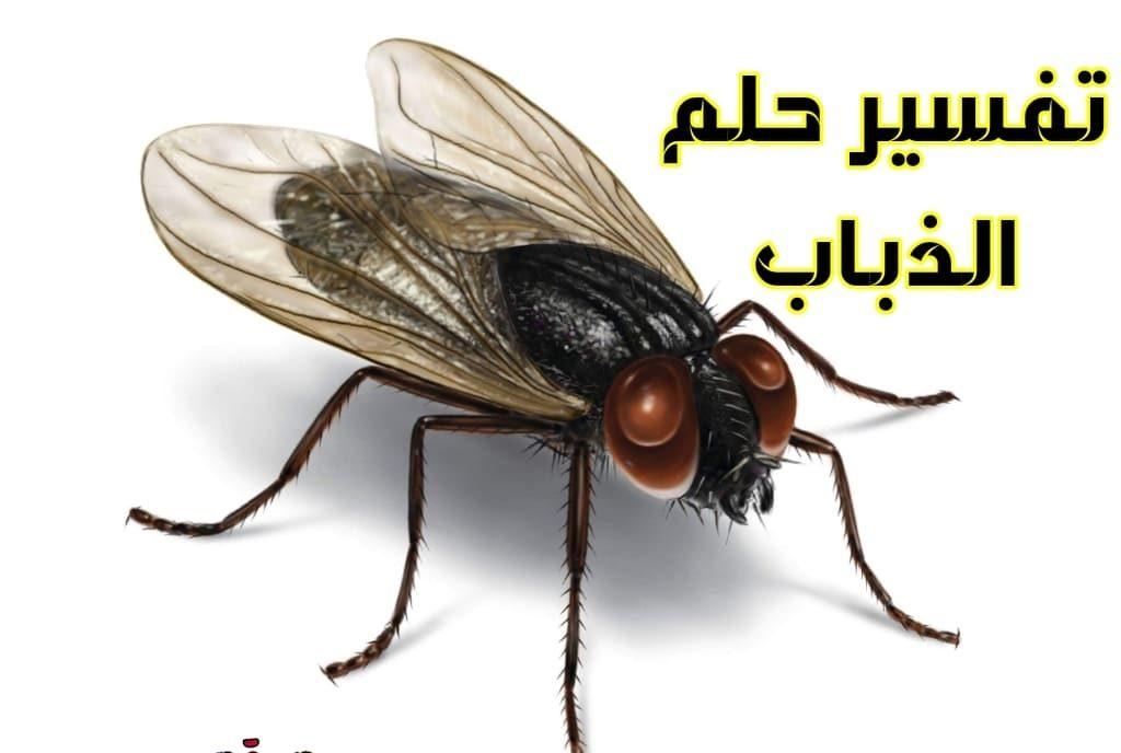 تفسير حلم الحشرات الطائرة في المنام .