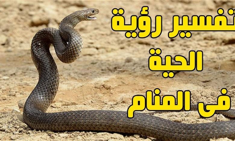 Photo of تفسير حلم الحية في المنام