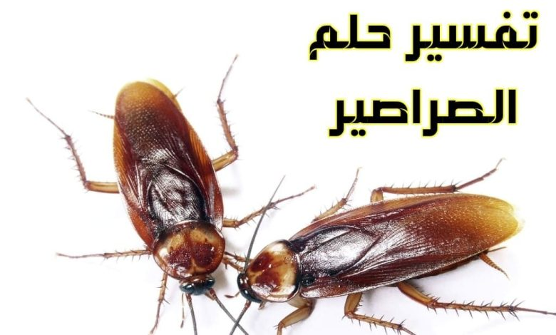 Photo of تفسير حلم الصراصير في المنام