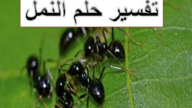 Photo of تفسير حلم النمل
