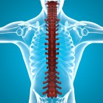 علاج التهاب النخاع الشوكي بالاعشاب