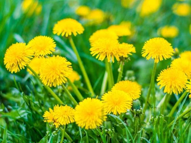 علاج تورم الكاحل بالاعشاب .