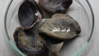 Photo of فوائد الظفر