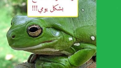 Photo of فوائد الضفادع