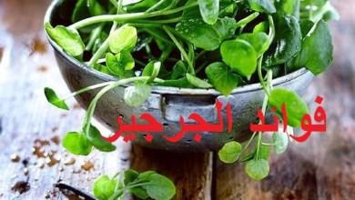 Photo of فوائد الجرجير