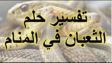 Photo of تفسير رؤية الثعبان في المنام للمتزوجة
