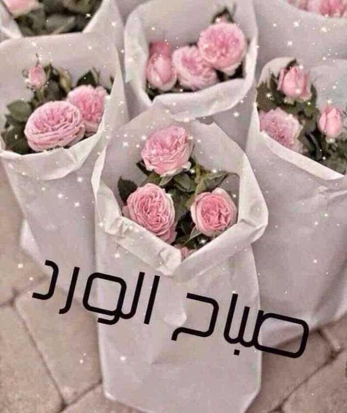 صباح الورد والياسمين حبيبتي , اروع الكلمات في الصباح