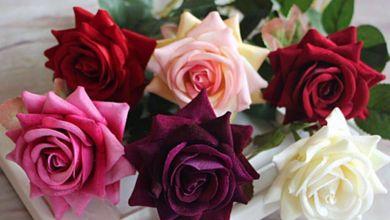 Photo of أحلى صور ورد, لقطات طبيعية لأروع أشكال الورد على الإطلاق, صور جذابة لأطيب أنواع الورد