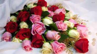 Photo of احلى صور ورد , جمال وروعة صور الورود