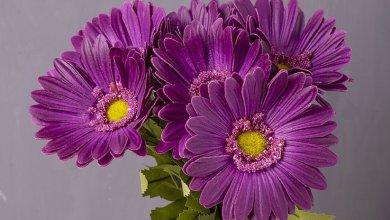 Photo of أجمل صور ورود طبيعية , صورة أجمل ورد
