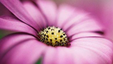 Photo of صور ورد صور ورد , اجمل صور الورد