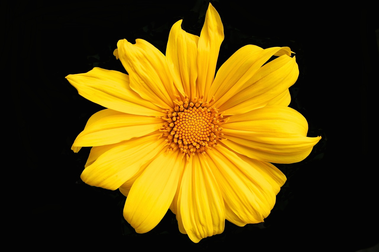 صور ورد أصفر