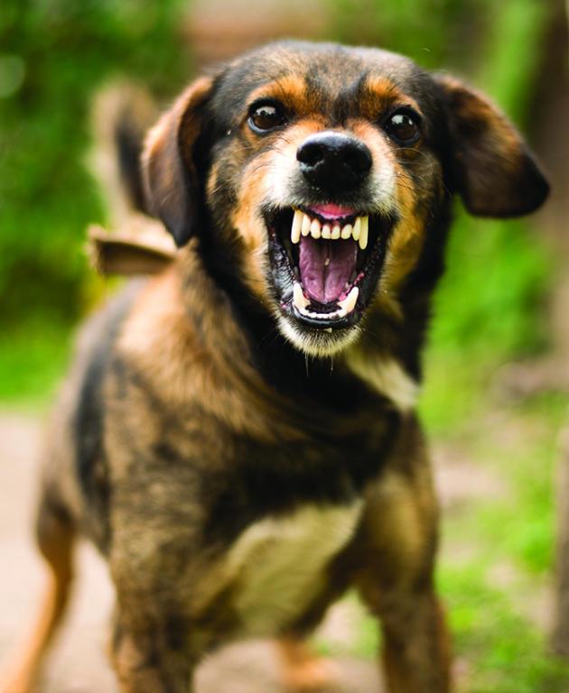 كيفية التعامل مع عضة الكلب