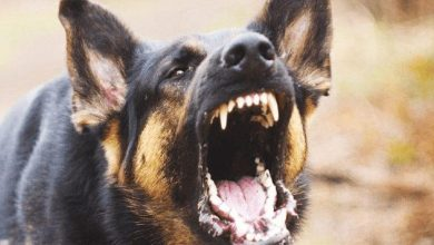 Photo of كيفية التعامل مع عضة الكلب
