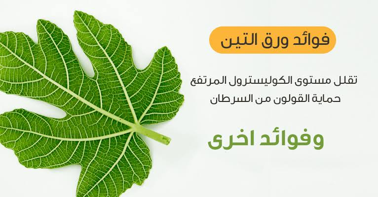 Photo of فوائد أوراق التين