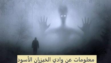 Photo of معلومات عن وادي الخيزران الأسود
