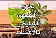 Photo of علاج تكيس المبايض بالاعشاب الطبيعية