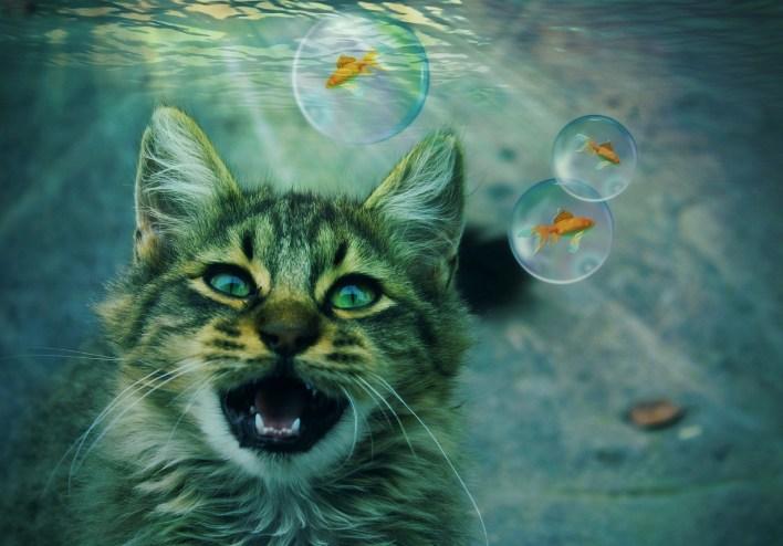 رؤية القطة في المنام