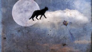 Photo of القطط في المنام