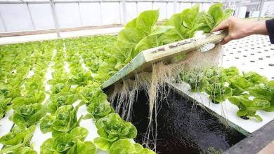 Photo of أهم 7 شركات للزراعة المائية في الإمارات