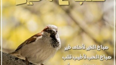 Photo of رسائل صباح الخير جميله