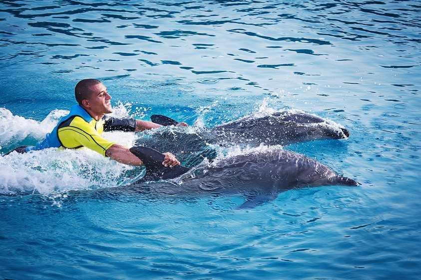 خليج الدلافين في دبي