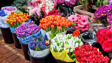 Photo of أشهر 10 متاجر بيع الورد والأزهار في الرياض