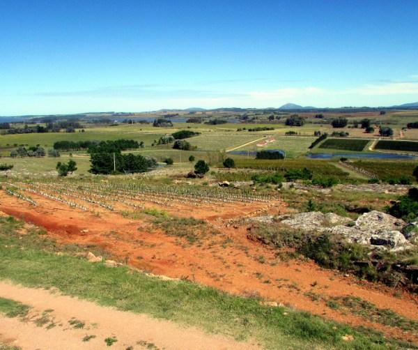 view from Alto de la Ballena in Maldonado