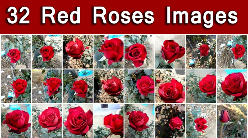 32 New Lovely Red Roses Image Wallpaper, Hd Red Roses pic