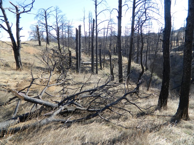 Wind snapped and broken tree limbs lay like matchsticks across the ground and dry ravines in the National Forest.