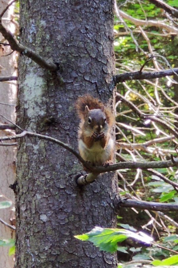 Squirrel beim naschen
