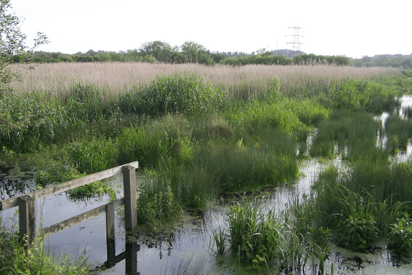 First Meadow