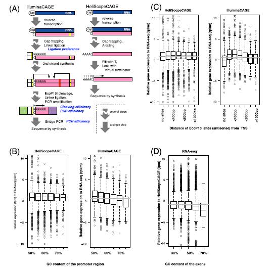 Comparison of CAGE and RNA-seq transcriptome profiling
