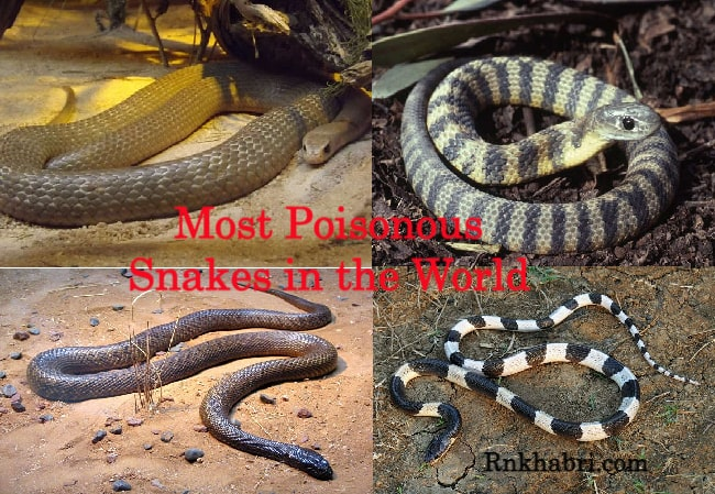 Which are the Most Poisonous Snakes in the World ?