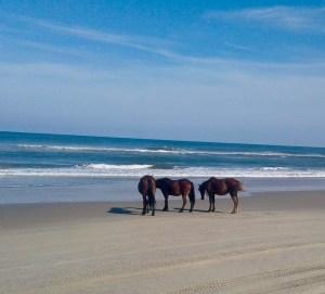 Three Wild Spanish Ponies on the Shore