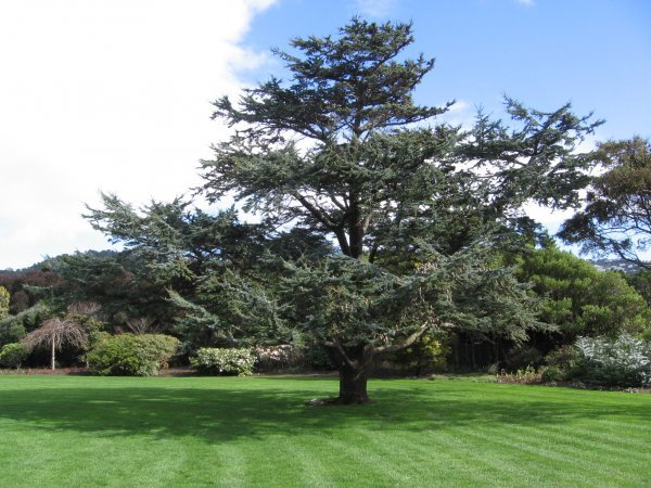 notable trees of new