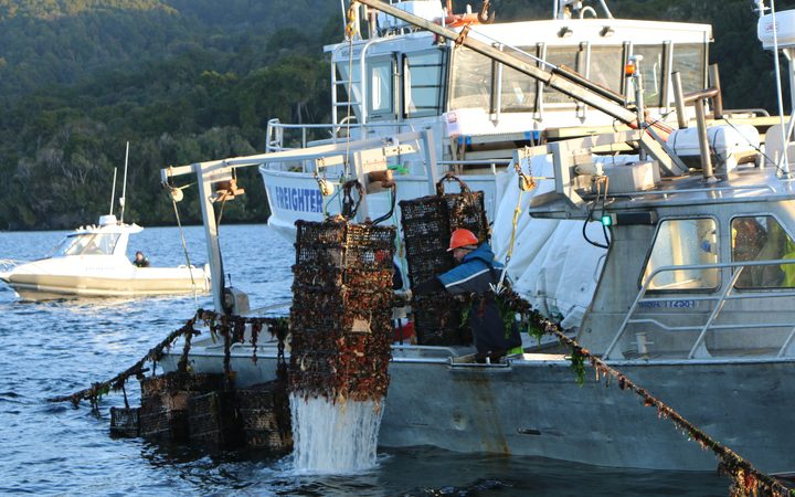 Boat cranes lift oyster cages from the water in Big Glory Bay.