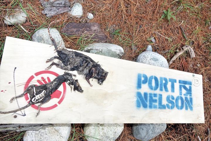 Dried rats on Haulashore Island.