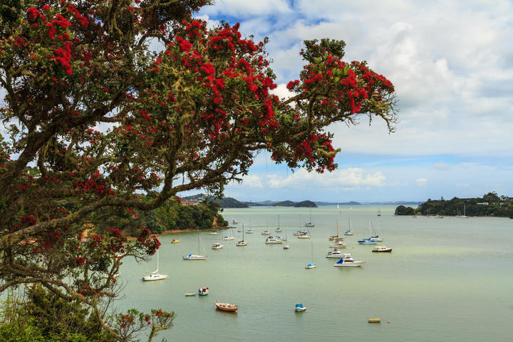 Opua, in the Bay of Islands.
