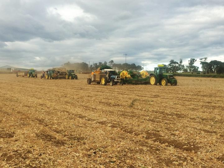 Work underway at Bhana Family Farms. The company has pasture in northern Waikato and its packhouse in the south of the Auckland region.